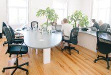 scaune de birou featured